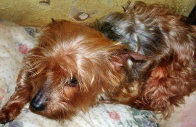 Ma Lili chez le vétérinaire