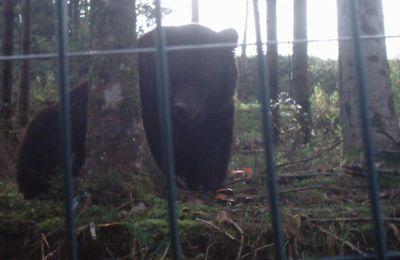 """""""ours-homme"""" joue avec moi...(Récit d'une visite au Bâeren-Park)..."""