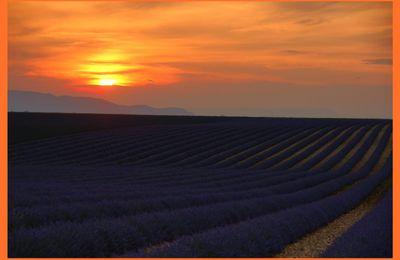 coucher du soleil sur les lavandes