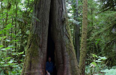 Dernières photos de Vancouver et de l'ouest Canadien par Didier HACQUART