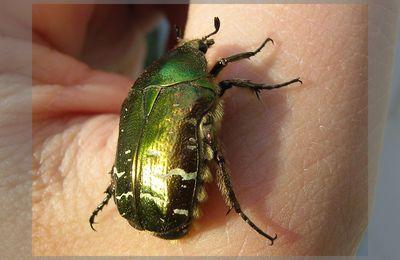 Synchronicité : l'histoire du scarabée