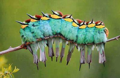a strange caterpillar...