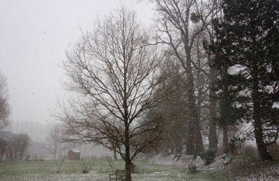L'hiver des hydrangeas (2)