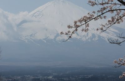 Ikebana du cerisier