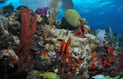 Mexique : plongées colorées à Playa del Carmen