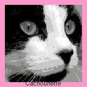 tête de chat noir et blanc