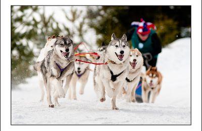 Course de chiens de traîneaux au Lac Blanc