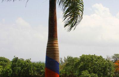 JAMAIQUE INSOLITE
