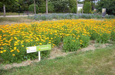 Un jardin botanique...