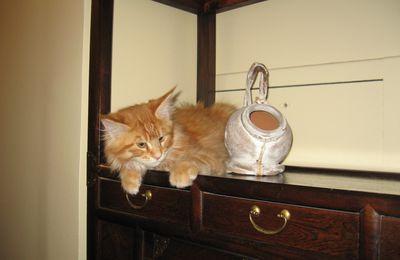 Un an déjà et PSYCHO'S CATS