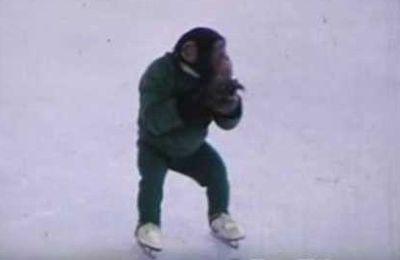 Jonny, le singe qui fait du patin à glace