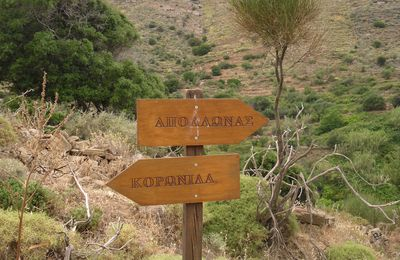 Obstination interprète