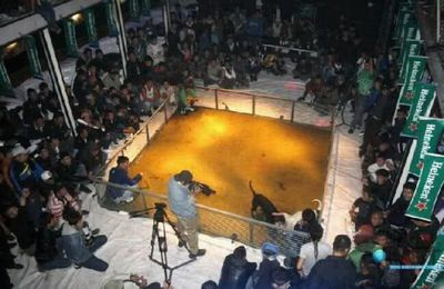 Heineken dog fight picture
