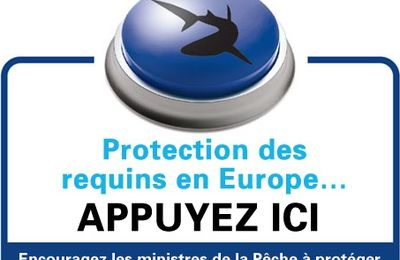 Pétition sur la protection des requins en Europe