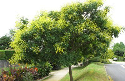 Plantations de devant : notre jardin d'ornement