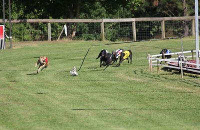 Dernière ligne droite pour les greyhounds