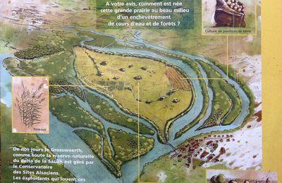 Munchhausen, La réserve naturelle du Delta de la Sauer 1/2
