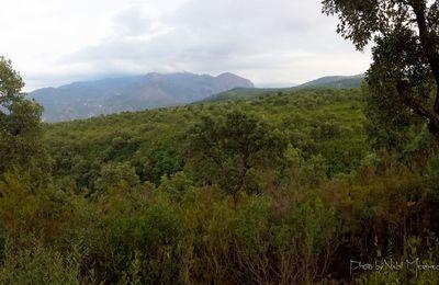 Forêt dense Ouled Ali, El Milia