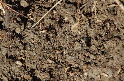 Histoire sur terre entre des termites et des fourmis
