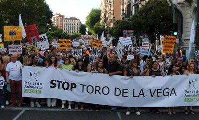 Toro de la Vega : débat sur le sujet entre les députés espagnols