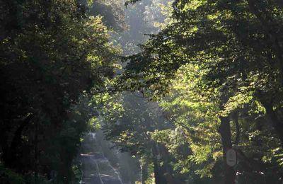 La forêt de Belgrade, un des poumons d'Istanbul