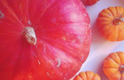 Gratin Pomme de Terres / Potiron / Béchamel