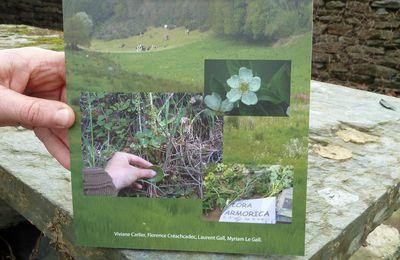 Parution d'un livre Flora armorica