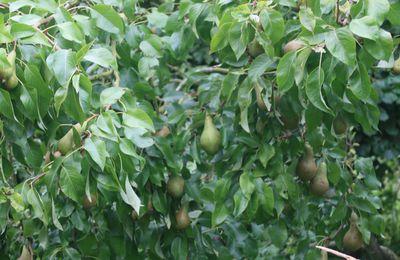Des pommes, des poires et des scou................ et du raisin!