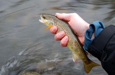 Petits poissons d'avril