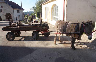 Article 115 Ballade aux pas des ânes avec l'école d'Aiglepierre à Dampierre