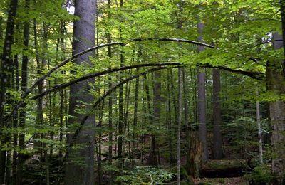 Urwald im Nationalpark Bayrischer Wald