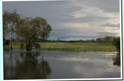 Kakadu Park : Yellow water #1