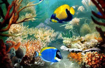www.mayotte-photos-plongee.com est sur http://www.facebook.com