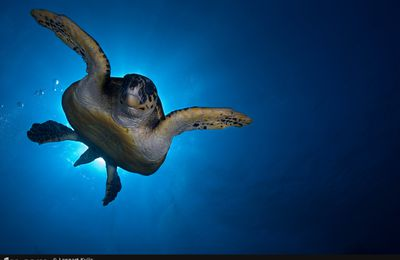 under/water Today's shot : tortue