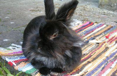 Un lapin en balade.
