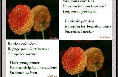 Flore pomponée