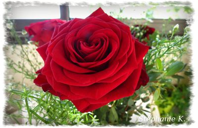 Un bouquet de roses rouges...