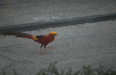 Bel oiseau !!