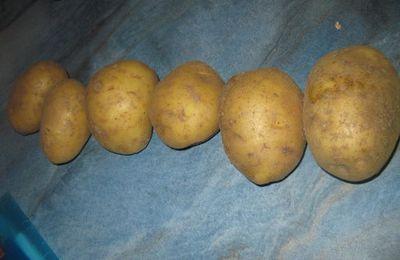 tu manges quoi ce soir: patates coques