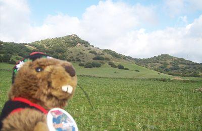 Marmotte à Villasimius