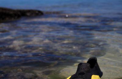 Que voit-on sous l'eau à l'île Maurice ?