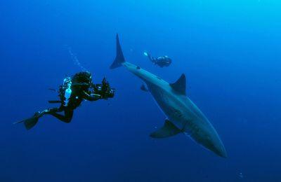"""Diffusion du film """"Méditerranée, royaume perdu des requins"""" sur France 2"""