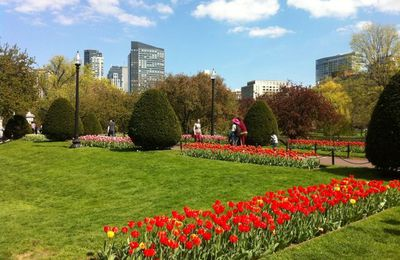 Les tulipes de Boston
