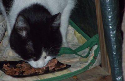 PILOU petite chatte perdue depuis deux mois retrouve ses maitres