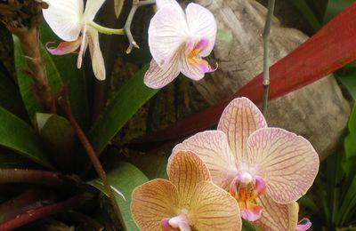 Quelques orchidées du Parc PHOENIX de Nice