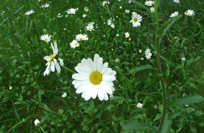 les graminées et les fleurs sauvages dans le jardin...