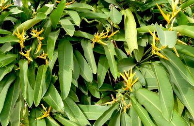 Fleurs tropicales... variété de couleurs et de formes