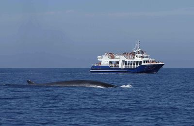 WHALE WATCHING, PLANNING DES SORTIES EN MER ESTIVALES 2012
