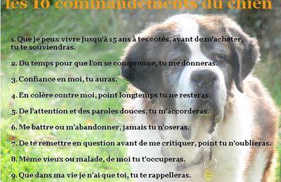 Les 10 commandements du chien.