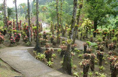 Le Jardin de Balata un site magnifique